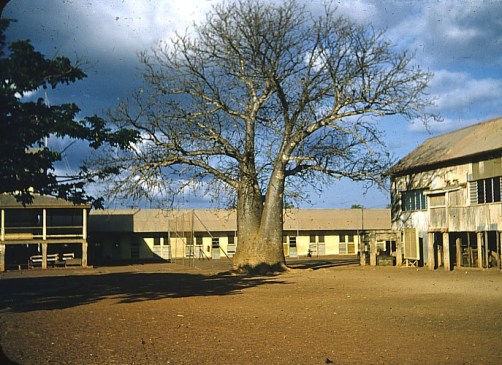 Baobab tree at school, Darwin - the old Darwin Primary School in Cavenagh St, on the site  of the Post Office car park, 1957