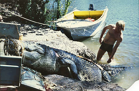 Buck Salau assisting Sweetheart the crocodile on the back of a trailer after being captured in the Sweet's Billabong, Finniss River, 1979.