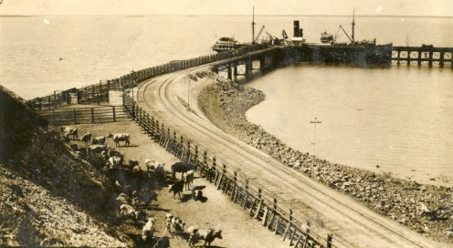 Darwin wharf and cattle yards